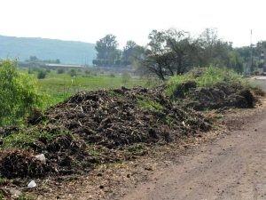 Desdeñan celebración del Día del Medio Ambiente en Yuriria