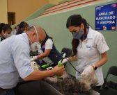 Inicio la Semana Nacional de Esterilización Quirúrgica Canina y Felina en Guanajuato